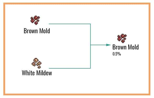 Brown Mold Chart