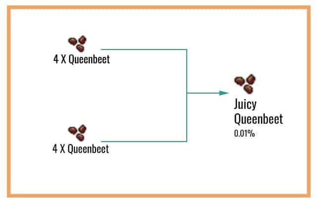 Juicy-Queenbeet