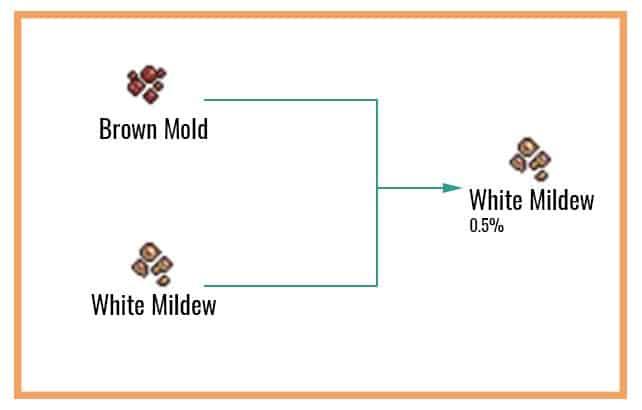 White Mildew Chart